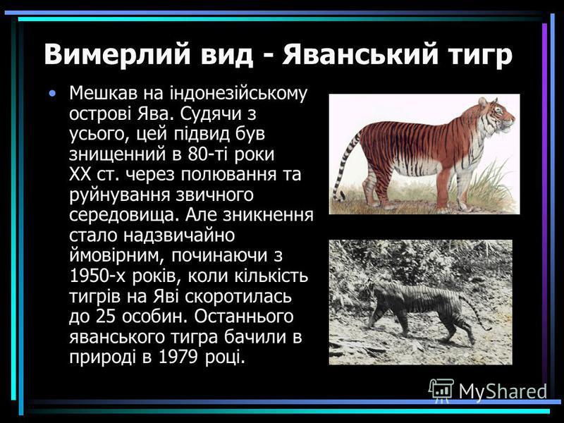 Мешкав на індонезійському острові Ява. Судячи з усього, цей підвид був знищенний в 80-ті роки ХХ ст. через полювання та руйнування звичного середовища. Але зникнення стало надзвичайно ймовірним, починаючи з 1950-х років, коли кількість тигрів на Яві