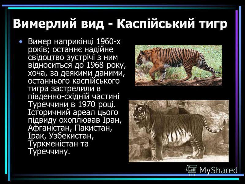 Вимер наприкінці 1960-х років; останнє надійне свідоцтво зустрічі з ним відноситься до 1968 року, хоча, за деякими даними, останнього каспійського тигра застрелили в південно-східній частині Туреччини в 1970 році. Історичний ареал цього підвиду охопл