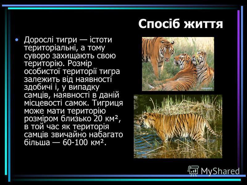 Дорослі тигри істоти територіальні, а тому суворо захищають свою територію. Розмір особистої території тигра залежить від наявності здобичі і, у випадку самців, наявності в даній місцевості самок. Тигриця може мати територію розміром близько 20 км²,
