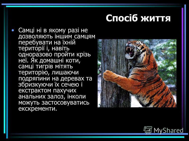 Самці ні в якому разі не дозволяють іншим самцям перебувати на їхній території і, навіть одноразово пройти крізь неї. Як домашні коти, самці тигрів мітять територію, лишаючи подряпини на деревах та збризкуючи їх сечею і екстрактом пахучих анальних за