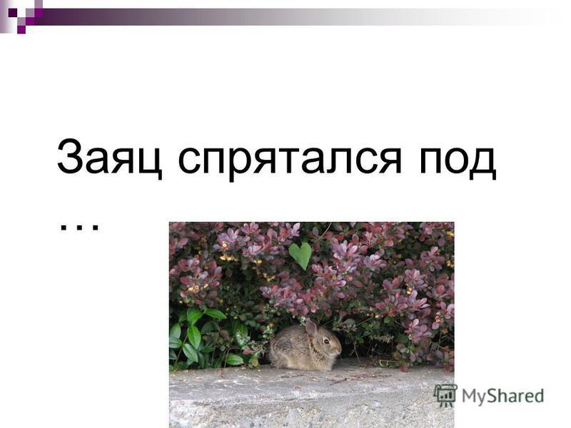 Заяц спрятался под …