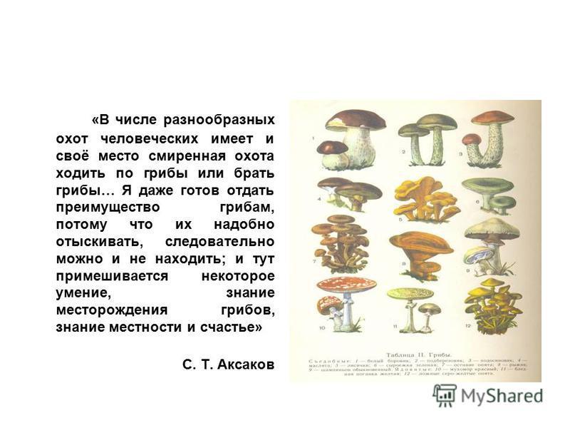 «В числе разнообразных охот человеческих имеет и своё место смиренная охота ходить по грибы или брать грибы… Я даже готов отдать преимущество грибам, потому что их надобно отыскивать, следовательно можно и не находить; и тут примешивается некоторое у