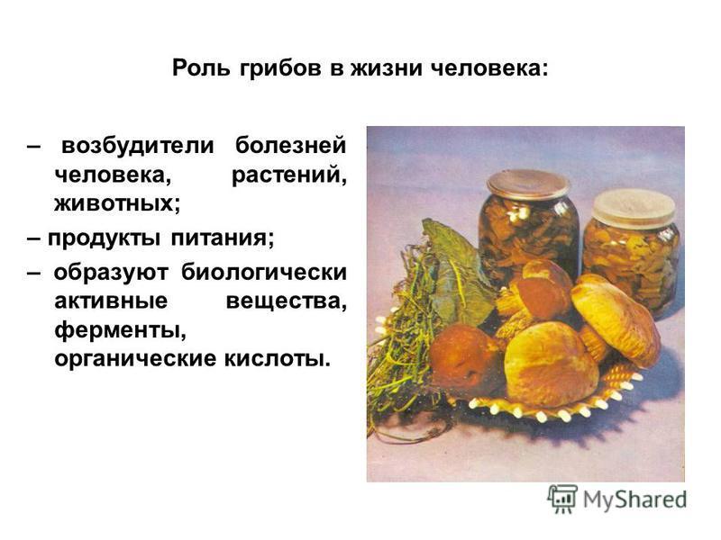 Роль грибов в жизни человека: – возбудители болезней человека, растений, животных; – продукты питания; – образуют биологически активные вещества, ферменты, органические кислоты.