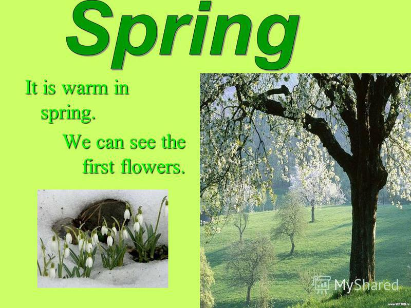 It is warm in spring. We can see the first flowers. We can see the first flowers.