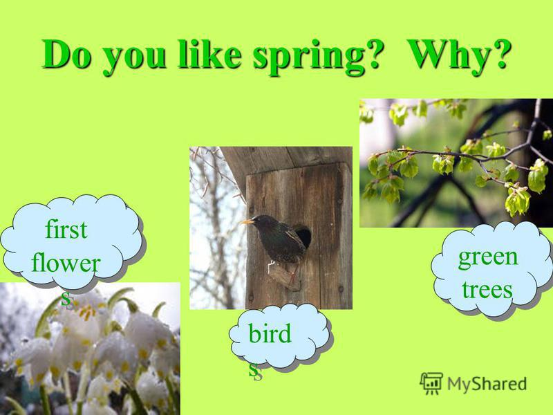 Do you like spring? Why? first flower s first flower s bird s green trees green trees