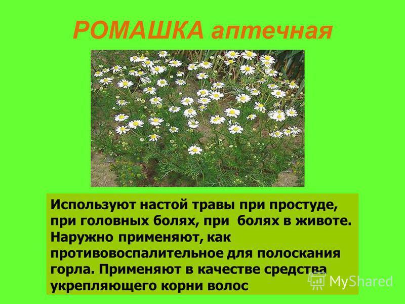 РОМАШКА аптечная Используют настой травы при простуде, при головных болях, при болях в животе. Наружно применяют, как противовоспалительное для полоскания горла. Применяют в качестве средства укрепляющего корни волос
