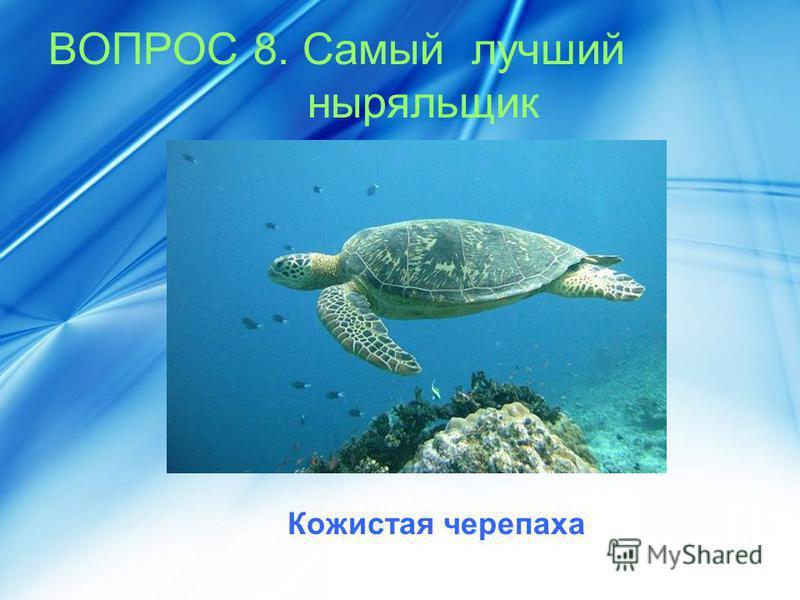 ВОПРОС 8. Самый лучший ныряльщик Кожистая черепаха
