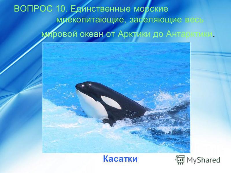 ВОПРОС 10. Единственные морские млекопитающие, заселяющие весь мировой океан от Арктики до Антарктики. Касатки