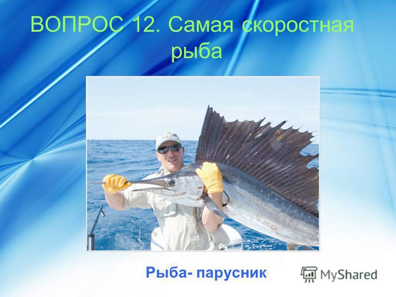 ВОПРОС 12. Самая скоростная рыба Рыба- парусник