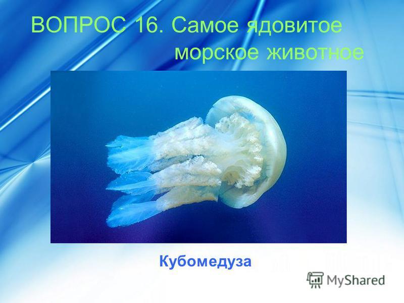 ВОПРОС 16. Самое ядовитое морское животное Кубомедуза