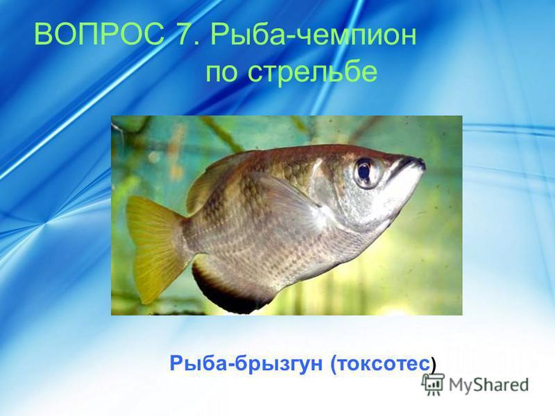 ВОПРОС 7. Рыба-чемпион по стрельбе Рыба-брызгун (токсотес )