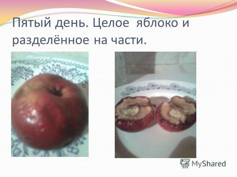 Пятый день. Целое яблоко и разделённое на части.