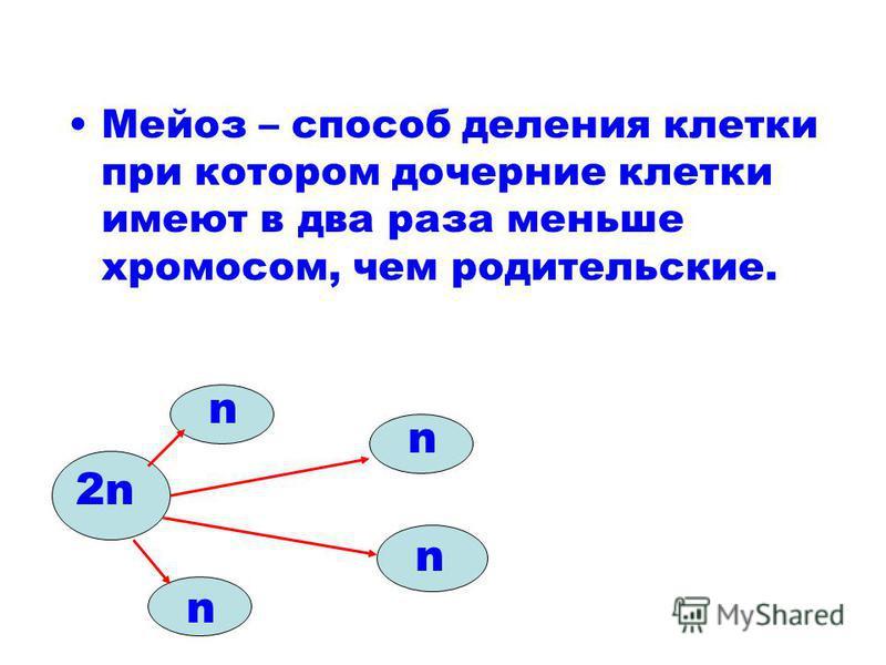 Мейоз – способ деления клетки при котором дочерние клетки имеют в два раза меньше хромосом, чем родительские. 2n n n n n
