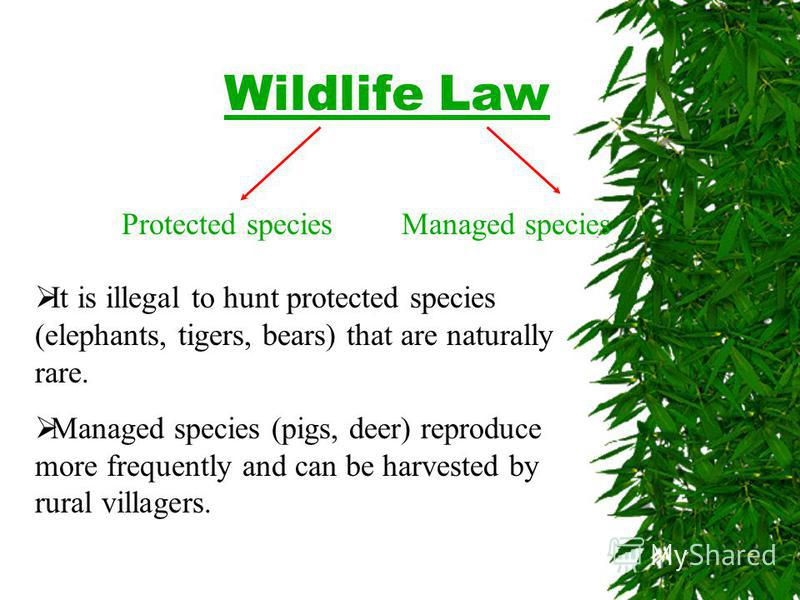 Wildlife Law Protected speciesManaged species It is illegal to hunt protected species (elephants, tigers, bears) that are naturally rare. Managed species (pigs, deer) reproduce more frequently and can be harvested by rural villagers.