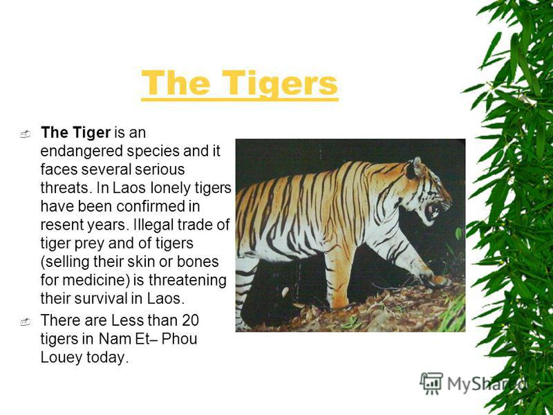 The Tigers The Tiger is an endangered species and it faces several serious threats. In Laos lonely tigers have been confirmed in resent years. Illegal trade of tiger prey and of tigers (selling their skin or bones for medicine) is threatening their s