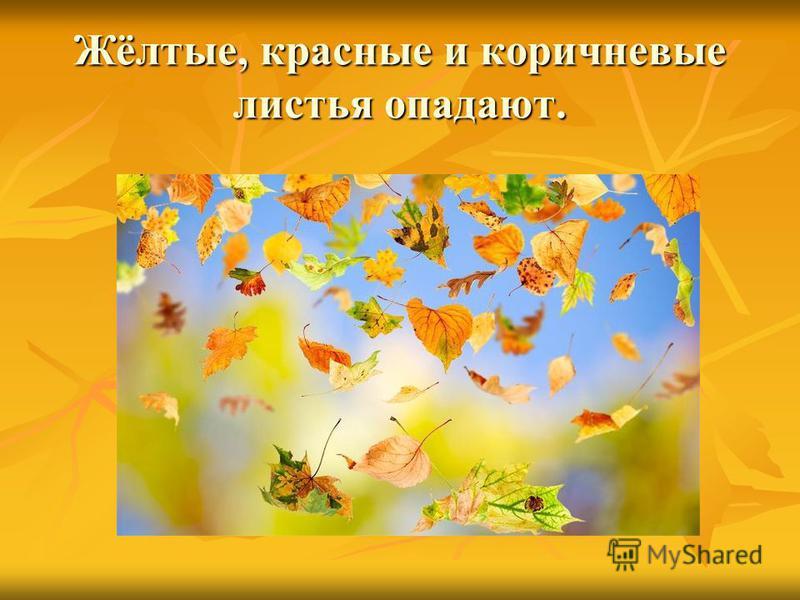 Жёлтые, красные и коричневые листья опадают.