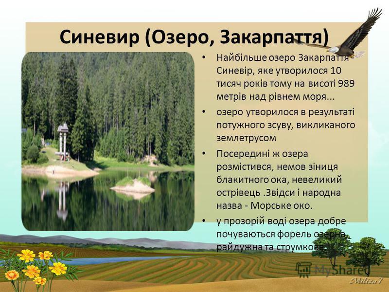 Синевир (Озеро, Закарпаття) Найбільше озеро Закарпаття - Синевір, яке утворилося 10 тисяч років тому на висоті 989 метрів над рівнем моря... озеро утворилося в результаті потужного зсуву, викликаного землетрусом Посередині ж озера розмістився, немов