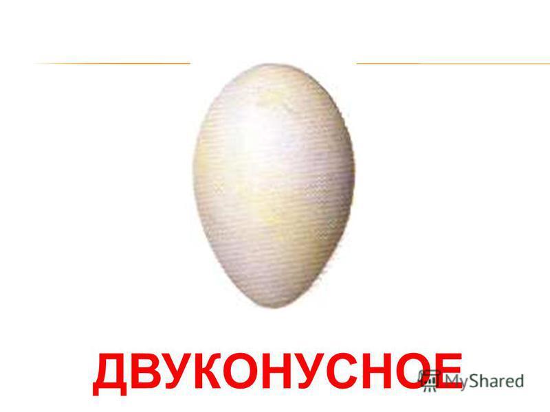ПТЕНЕЦ Птенец растет в яйце, а когда он готов вылупиться, то проламывает скорлупу клювом.