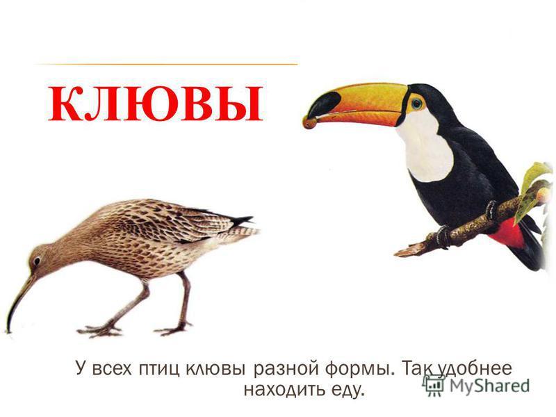 Книги по орнитологии скачать бесплатно