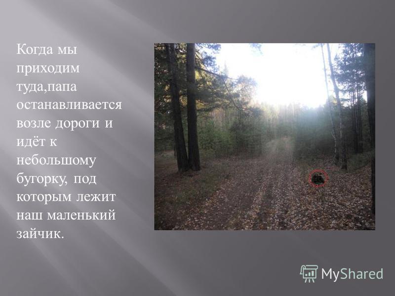 Когда мы приходим туда, папа останавливается возле дороги и идёт к небольшому бугорку, под которым лежит наш маленький зайчик.