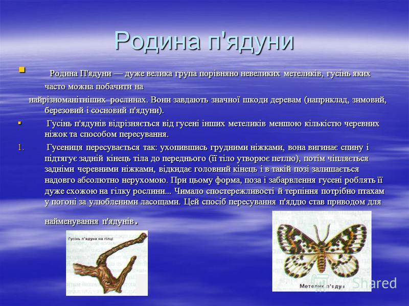 Родина п'ядуни Родина П'ядуни дуже велика група порівняно невеликих метеликів, гусінь яких часто можна побачити на Родина П'ядуни дуже велика група порівняно невеликих метеликів, гусінь яких часто можна побачити на найрізноманітніших рослинах. Вони з