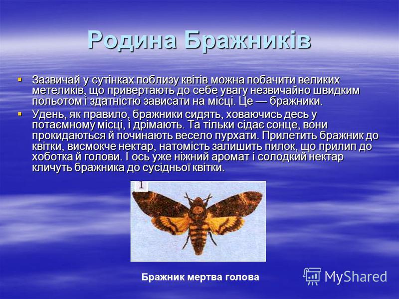 Родина Бражників Зазвичай у сутінках поблизу квітів можна побачити великих метеликів, що привертають до себе увагу незвичайно швидким польотом і здатністю зависати на місці. Це бражники. Зазвичай у сутінках поблизу квітів можна побачити великих метел