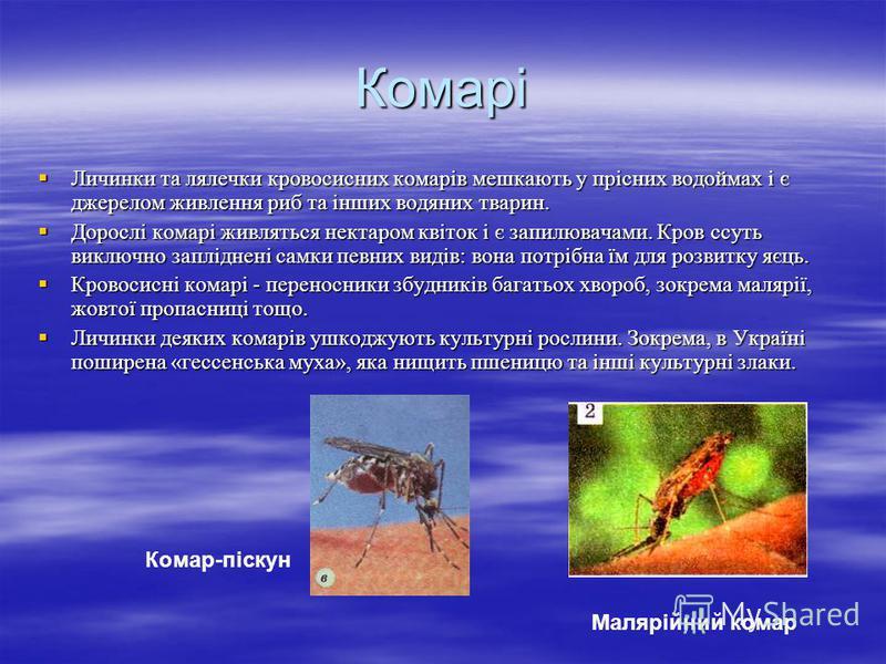 Комарі Личинки та лялечки кровосисних комарів мешкають у прісних водоймах і є джерелом живлення риб та інших водяних тварин. Личинки та лялечки кровосисних комарів мешкають у прісних водоймах і є джерелом живлення риб та інших водяних тварин. Дорослі