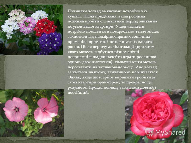 Починати догляд за квітами потрібно з їх купівлі. Після придбання, ваша рослина повинна пройти спеціальний період звикання до умов вашої квартири. У цей час квіти потрібно помістити в помірковано тепле місце, захистити від надмірних прямих сонячних п
