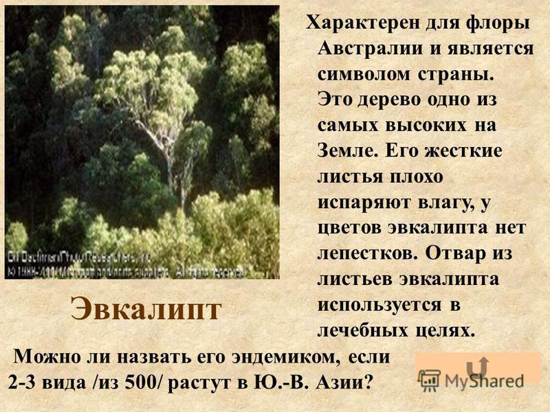 Эвкалипт Характерен для флоры Австралии и является символом страны. Это дерево одно из самых высоких на Земле. Его жесткие листья плохо испаряют влагу, у цветов эвкалипта нет лепестков. Отвар из листьев эвкалипта используется в лечебных целях. Можно