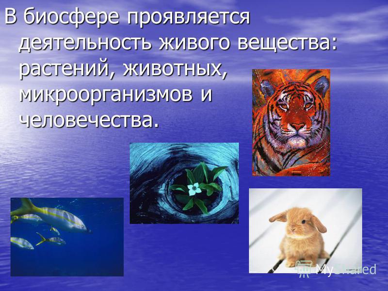 В биосфере проявляется деятельность живого вещества: растений, животных, микроорганизмов и человечества.