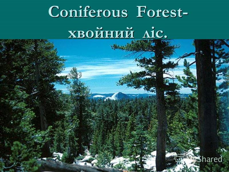 Coniferous Forest- хвойний ліс.