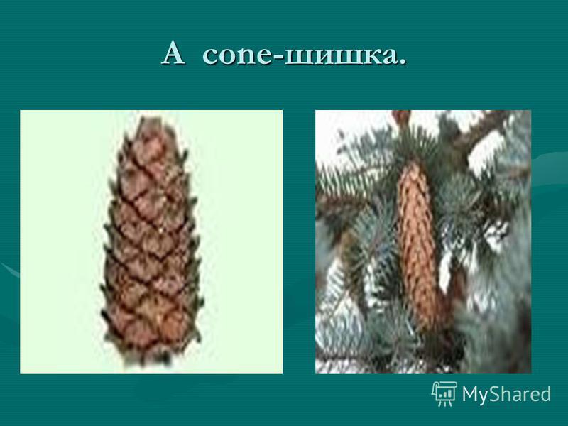 A cone-шишка.