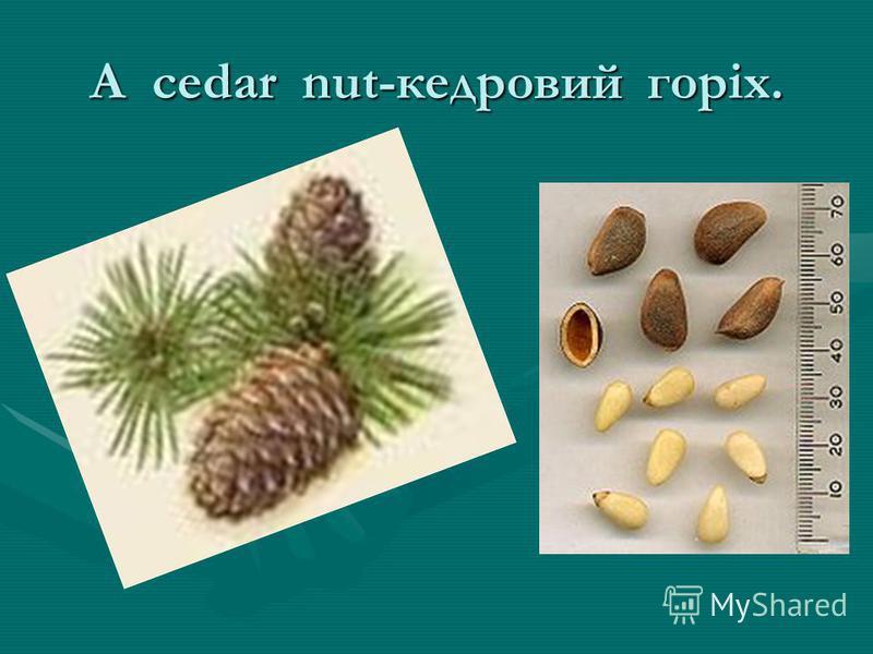 A cedar nut-кедровий горіх.