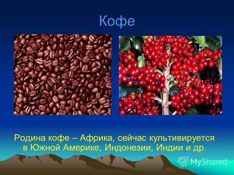 Кофе Родина кофе – Африка, сейчас культивируется в Южной Америке, Индонезии, Индии и др.