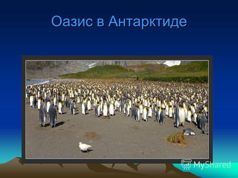Оазис в Антарктиде