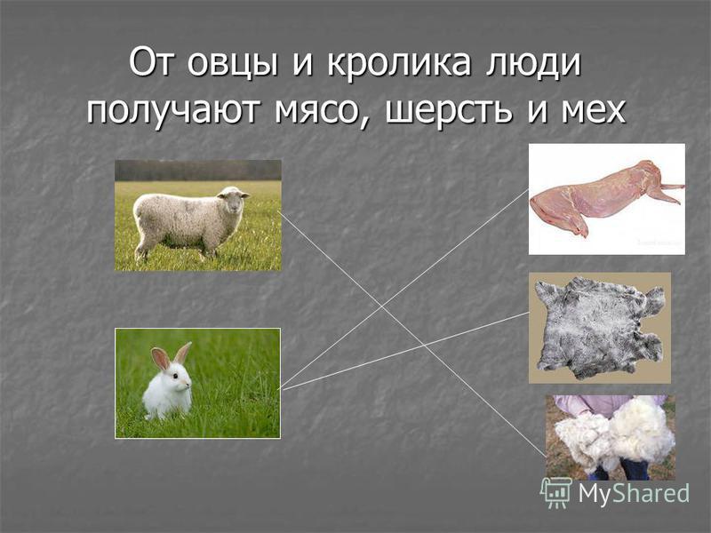 От овцы и кролика люди получают мясо, шерсть и мех