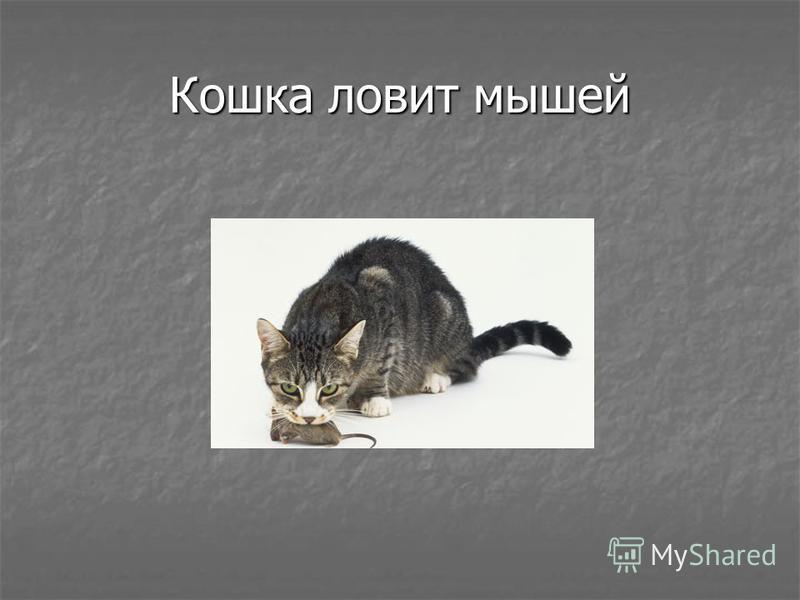 Кошка ловит мышей