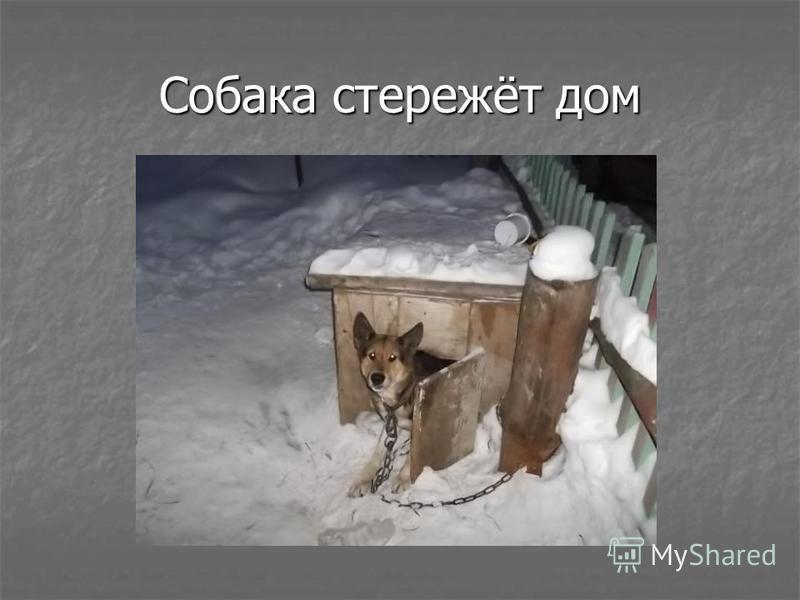 Собака стережёт дом