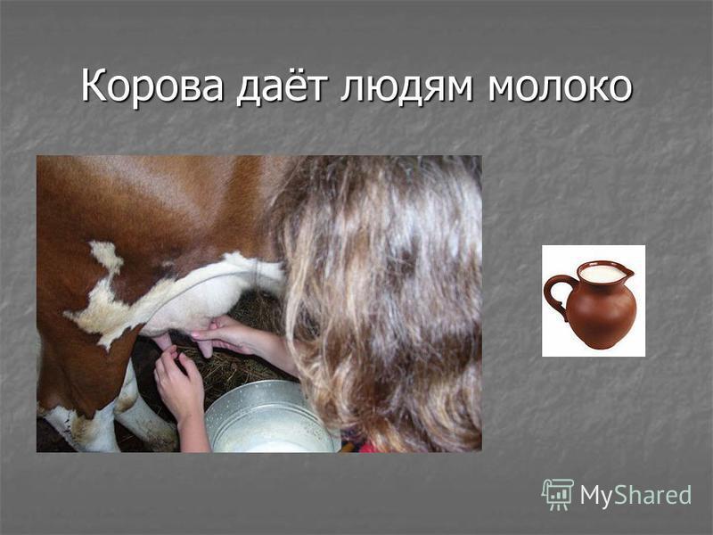 Корова даёт людям молоко
