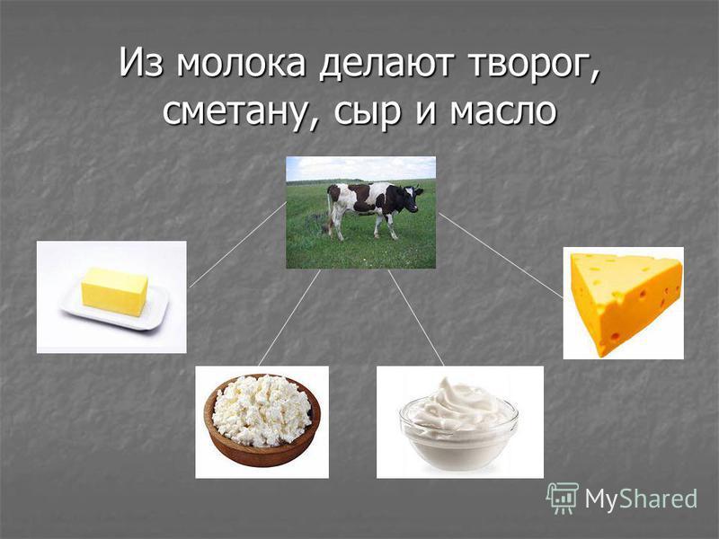 Из молока делают творог, сметану, сыр и масло