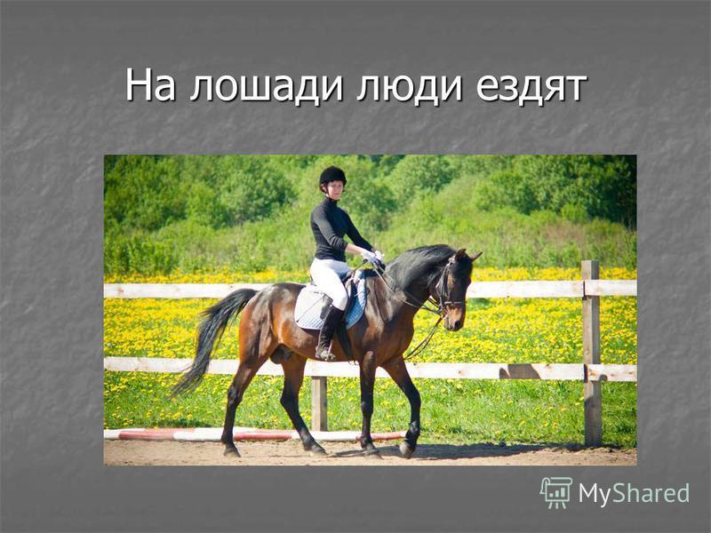 На лошади люди ездят
