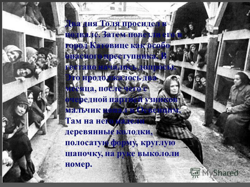 Два дня Толя просидел в подвале. Затем повезли его в город Катовице как особо опасного преступника. В гестапо начались допросы. Это продолжалось два месяца, после чего с очередной партией узников мальчик попал в Освенцим. Там на него надели деревянны