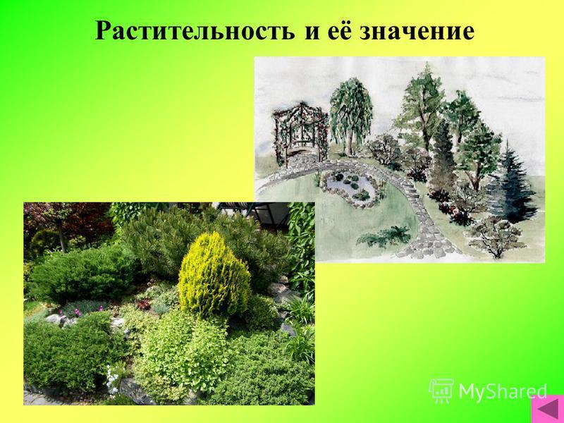 Растительность и её значение