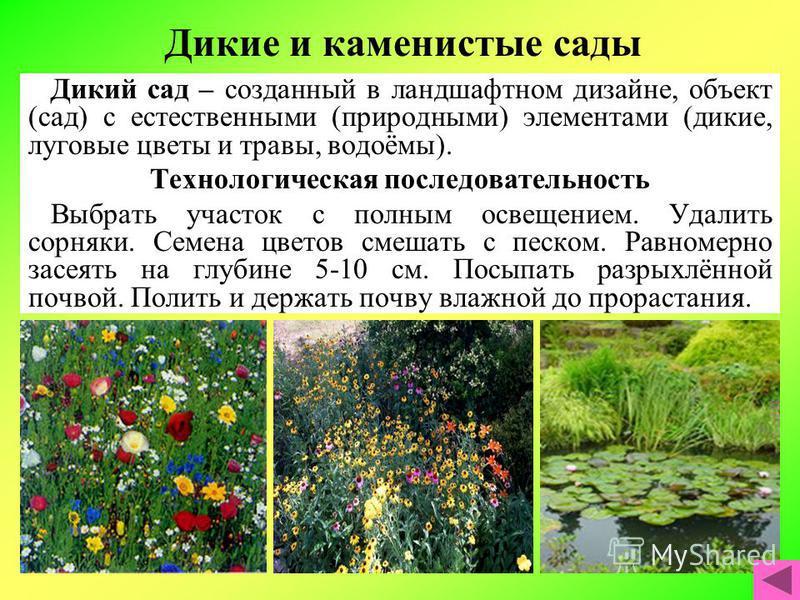 Дикие и каменистые сады Дикий сад – созданный в ландшафтном дизайне, объект (сад) с естественными (природными) элементами (дикие, луговые цветы и травы, водоёмы). Технологическая последовательность Выбрать участок с полным освещением. Удалить сорняки