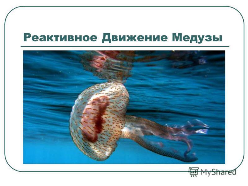 Реактивное Движение Медузы