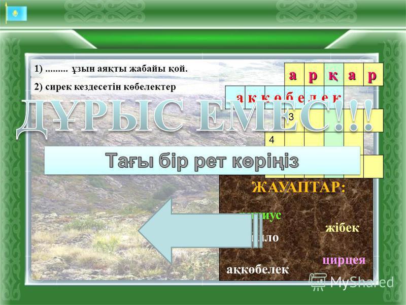 аполло рипиус церцея ЖАУАПТАР:арқар 3 4 5 ц е р ц е я 1)......... ұзын аяқты жабайы қой. 2) сирек кездесетін көбелектер ақкөбелек жібек