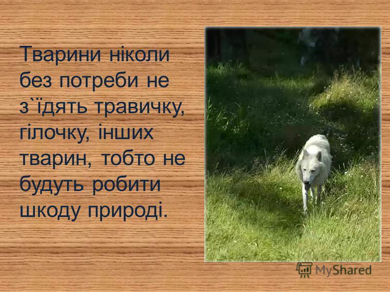 Тварини ніколи без потреби не з`їдять травичку, гілочку, інших тварин, тобто не будуть робити шкоду природі.