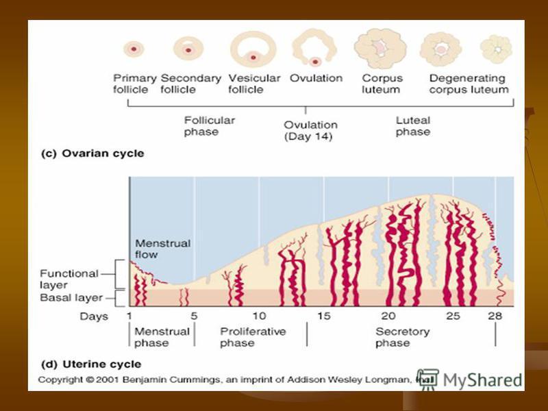 lipsa ciclului menstrual