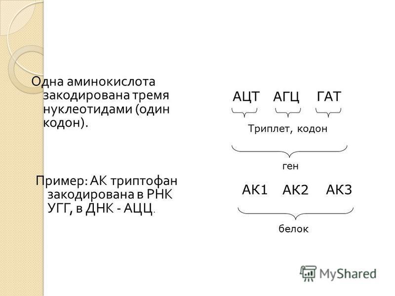 Одна аминокислота закодирована тремя нуклеотидами ( один кодон ). Пример : АК триптофан закодирована в РНК УГГ, в ДНК - АЦЦ. АЦТ АГЦ ГАТ Триплет, кодон ген АК1 АК2 АК3 белок