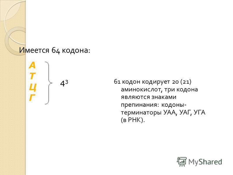 Имеется 64 кодона : 61 кодон кодирует 20 (21) аминокислот, три кодона являются знаками препинания : кодоны - терминаторы УАА, УАГ, УГА ( в РНК ). АТЦГАТЦГ 4 3